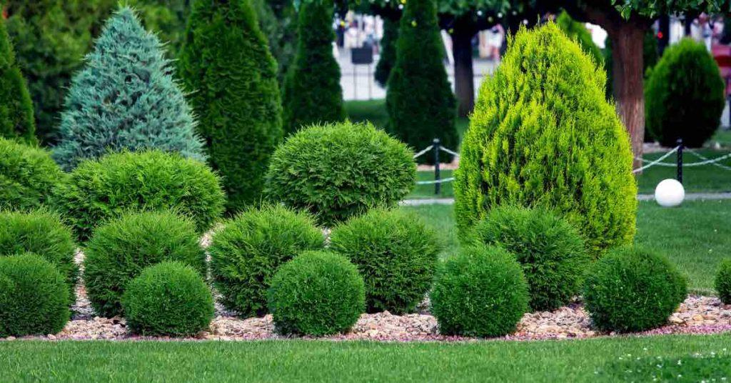 Decorative Rocks vs. Mulch vs. Soil: Pros & Cons