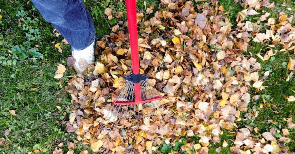 Affordable Fall Leaf Cleanup Services