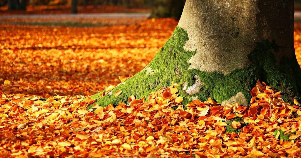 Best Time and Best Way to Rake Leaves